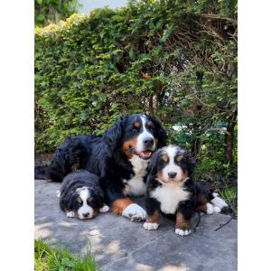 Coco en pups (2).jpg